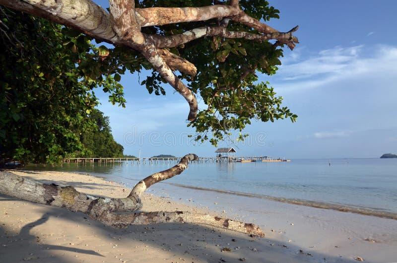 Ren härlig och naturlig strand 02 royaltyfri bild