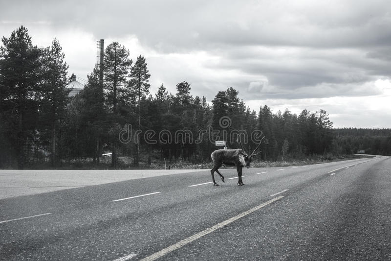 Ren på huvudvägen arkivfoto