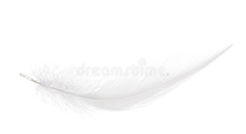 Ren vit isolerad mjuk fjäder arkivbilder