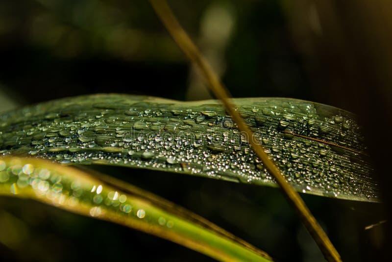 Rena droppar av dagg på grönt gräs royaltyfria bilder