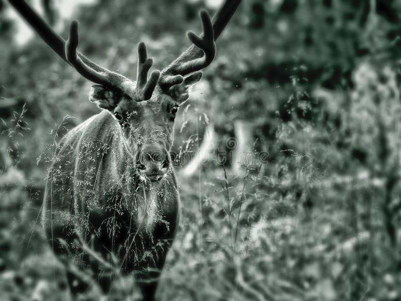 Rena na floresta fotos de stock royalty free