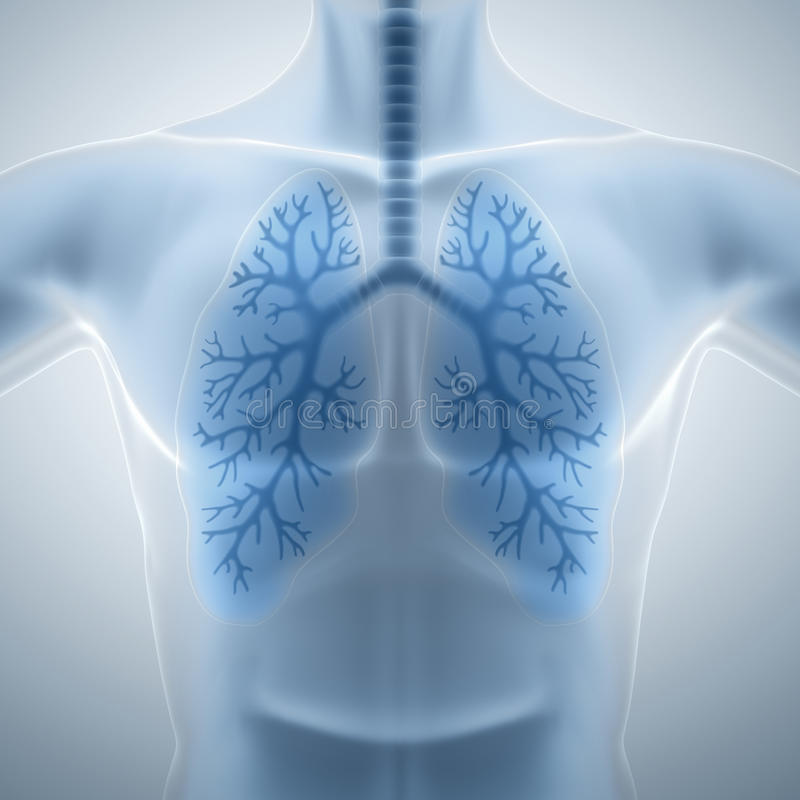 Rena och sunda lungor stock illustrationer