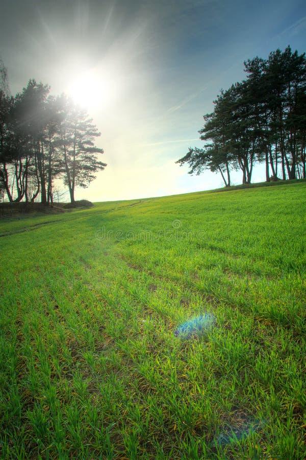 renacimiento de la primavera de la naturaleza imagenes de archivo