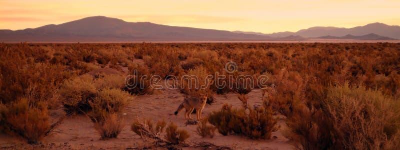 Renard camouflé de désert images stock