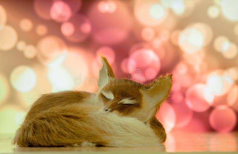 Renard en gros plan de sommeil sur le fond du bokee photos libres de droits