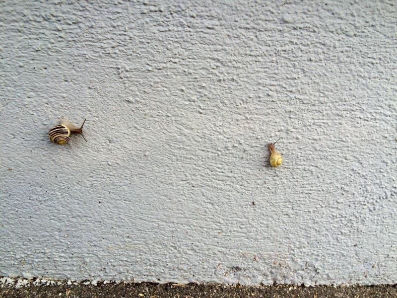 Rencontre d'escargot sur a avec le mur photos libres de droits