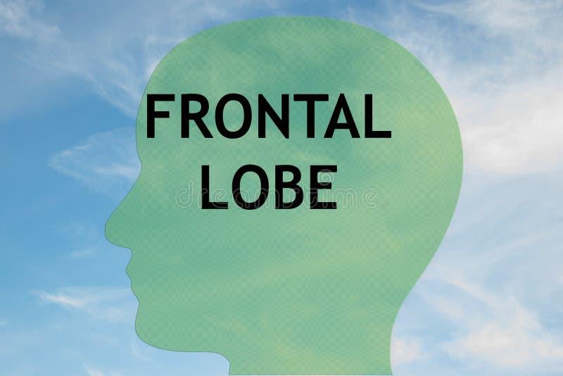 FRONTAL LOBE concept royalty free illustration