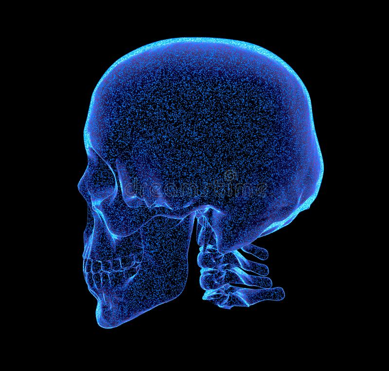 Rendered bluish x-ray image of human skull - oblique projection, 3D Illustration. Rendered bluish x-ray image of a human skull - oblique projection vector illustration