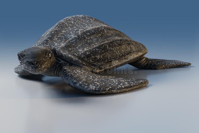 rendição 3d da tartaruga de Leatherback ou do coriacea de Dermochelys, isolada no fundo azul do tom, trajetos de grampeamento ilustração do vetor