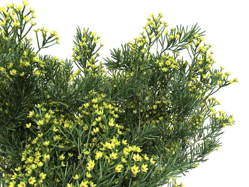 rendição 3d de um arbusto realístico da flor do isolado da vista dianteira ilustração do vetor
