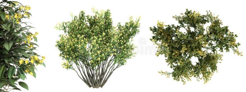 rendição 3d de uma árvore verde realística da vista superior isolada no whit ilustração stock