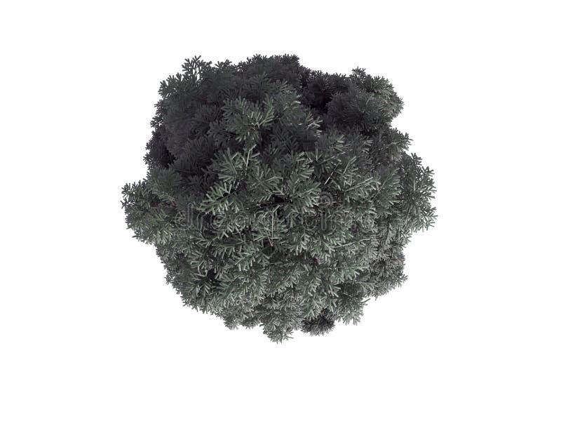 rendição 3d de uma árvore verde realística da vista superior isolada no whit ilustração do vetor