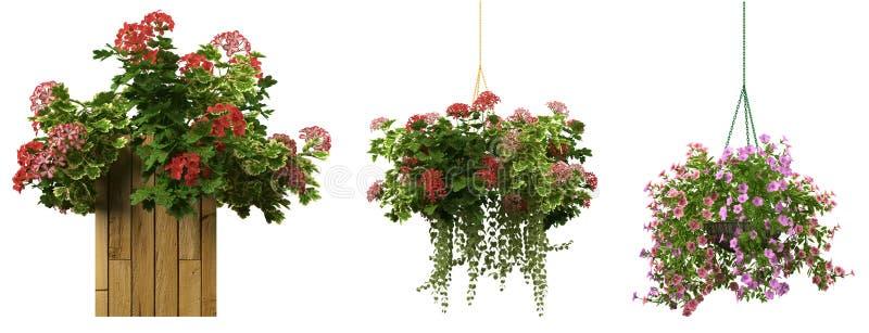 rendição 3d de uma coleção realística do potenciômetro de flor no wh ilustração royalty free