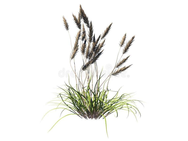 a rendição 3d do arbusto da flor isolada no branco pode ser usada para FO ilustração royalty free