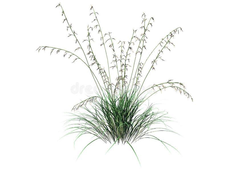 a rendição 3d do arbusto da flor isolada no branco pode ser usada para FO ilustração stock