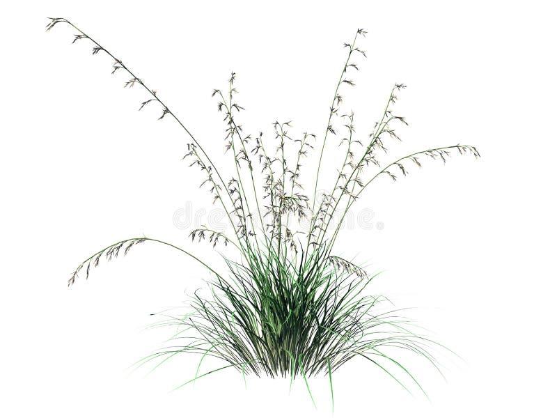 a rendição 3d do arbusto da flor isolada no branco pode ser usada para FO ilustração do vetor