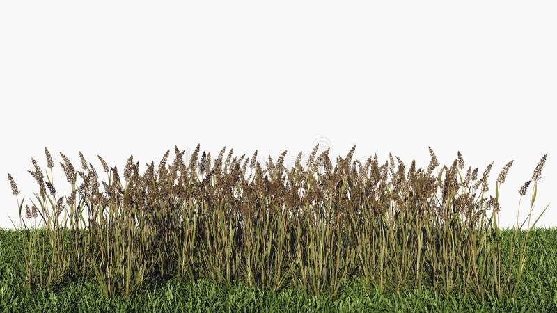 rendição 3d do arbustos sem emenda horizontais ilustração do vetor