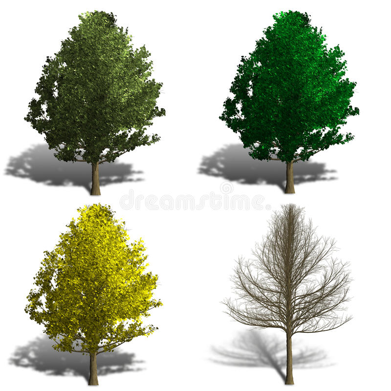 Rendição da árvore do biloba de Ginko que mostra a estação quatro ilustração royalty free