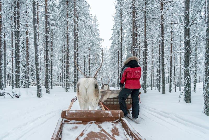 Rendier het sledging in Rovaniemi, Finland royalty-vrije stock afbeelding