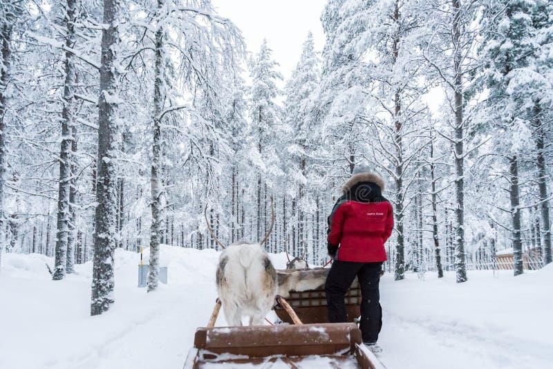 Rendier het sledging in Rovaniemi, Finland stock foto
