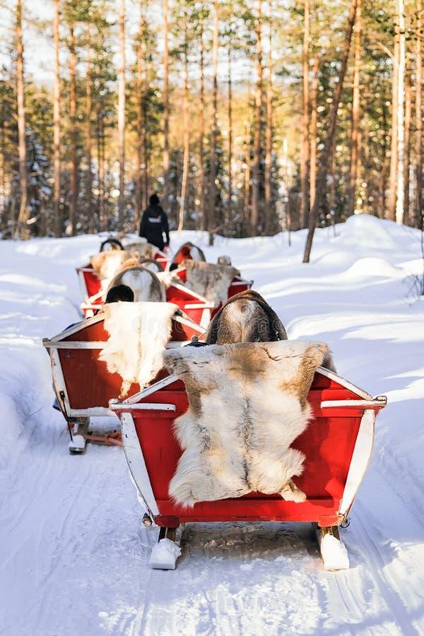 Rendier Safari Sleigh bij de Winterbos in Rovaniemi Finland Lapland royalty-vrije stock foto