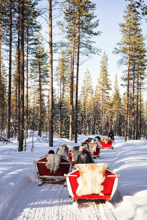 Rendier Safari Sleigh in de Winter Forest Rovaniemi Finland Lapland royalty-vrije stock afbeeldingen