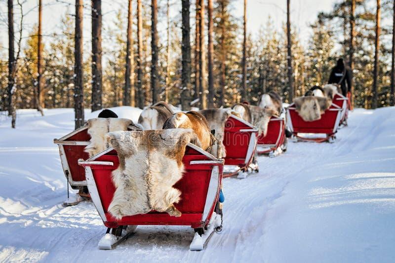 Rendier Safari Sleigh in de Winterbos in Rovaniemi Finland Lapland stock foto