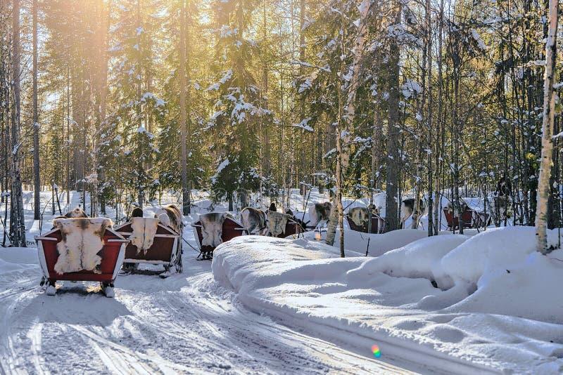 Rendier Safari Sleigh in de Winterbos in Rovaniemi Finland Lapland royalty-vrije stock fotografie