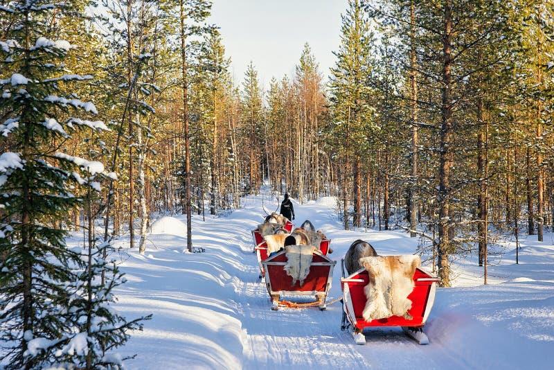 Rendier Safari Sleigh Winter Forest in Rovaniemi Finland Lapland royalty-vrije stock fotografie