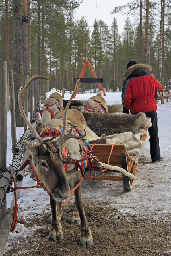 Rendier in Santa Claud-dorp, Lapland stock foto's