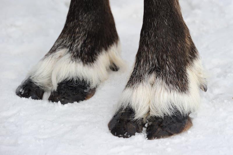 Rendieren De winter Yakutia stock afbeelding