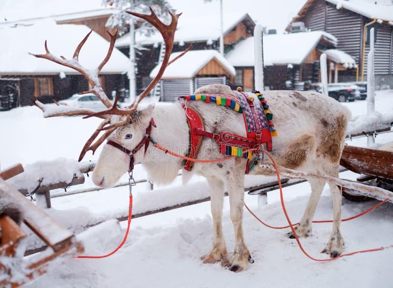 Rendieren in een de winterlandschap stock afbeelding
