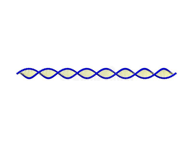 rendu 3d de ficelle d'ADN d'isolement à l'arrière-plan blanc illustration de vecteur