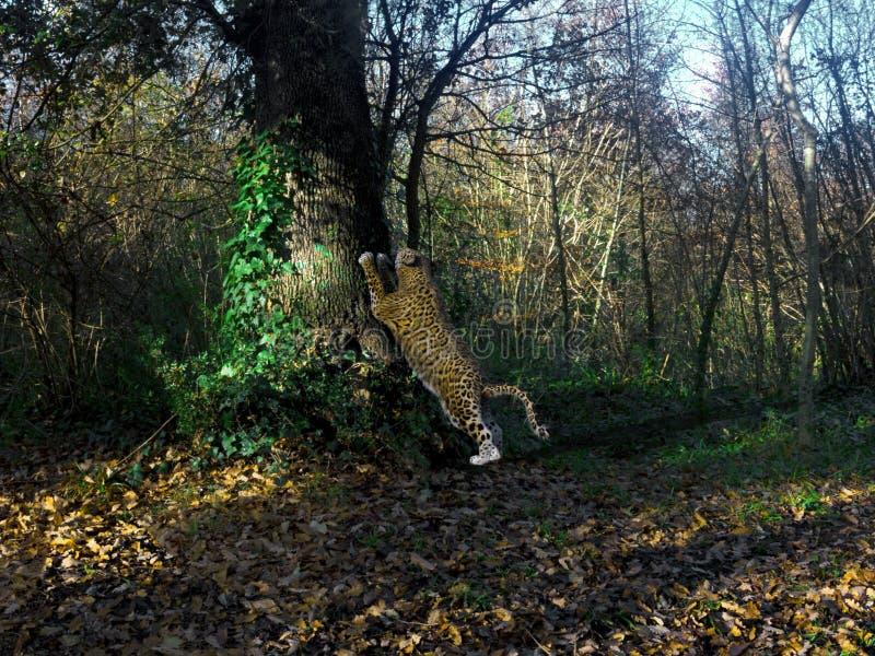 rendu 3d de grand jaguar streching au-dessus d'un arbre illustration stock