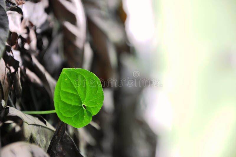 Free Renew Reborn Of Nature Royalty Free Stock Photos - 11815438