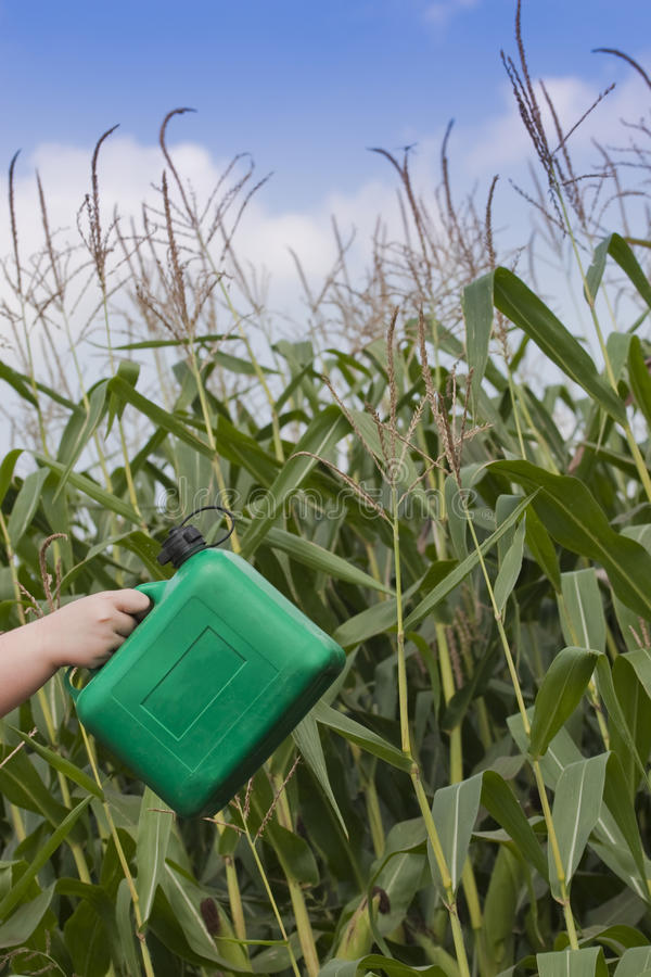 Download Renewable energy stock image. Image of corn, agriculture - 15428969