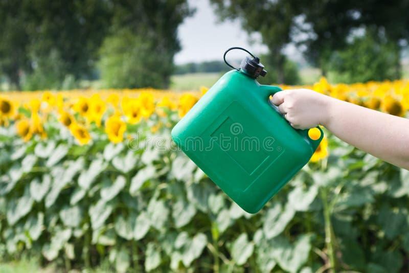 Download Renewable energy stock image. Image of renewable, food - 15474563