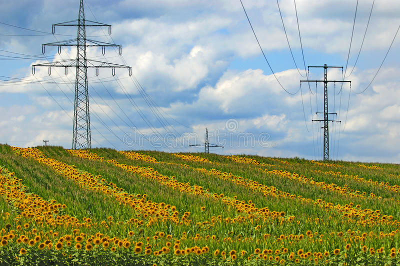 Renewable energy. High-tension power lines and sun flowers- renewable energy stock photography