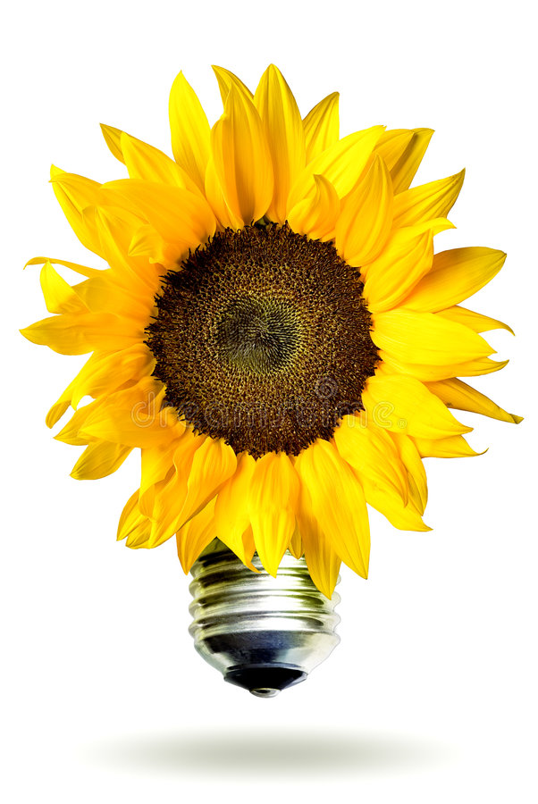 Download Renewable Energy Concept With Sunflower Stock Photo - Image of earth, bulb: 5541066