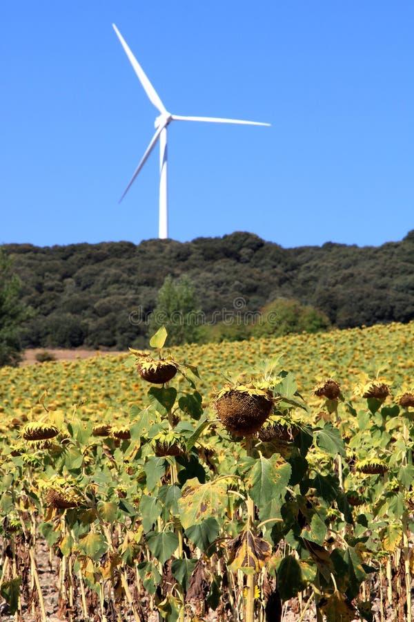 Renewable energy production like bio and wind