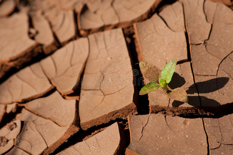 Download Renewal stock image. Image of sprout, renewal, africa - 18039735