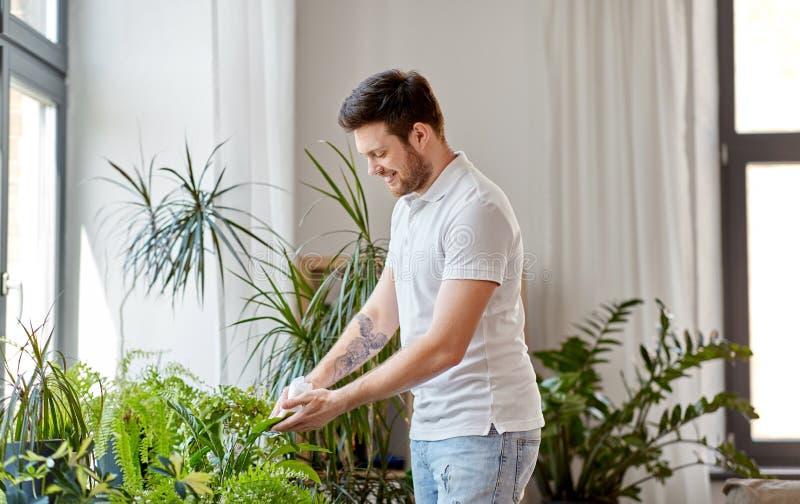 Rengörande houseplants för man sidor hemma royaltyfri bild