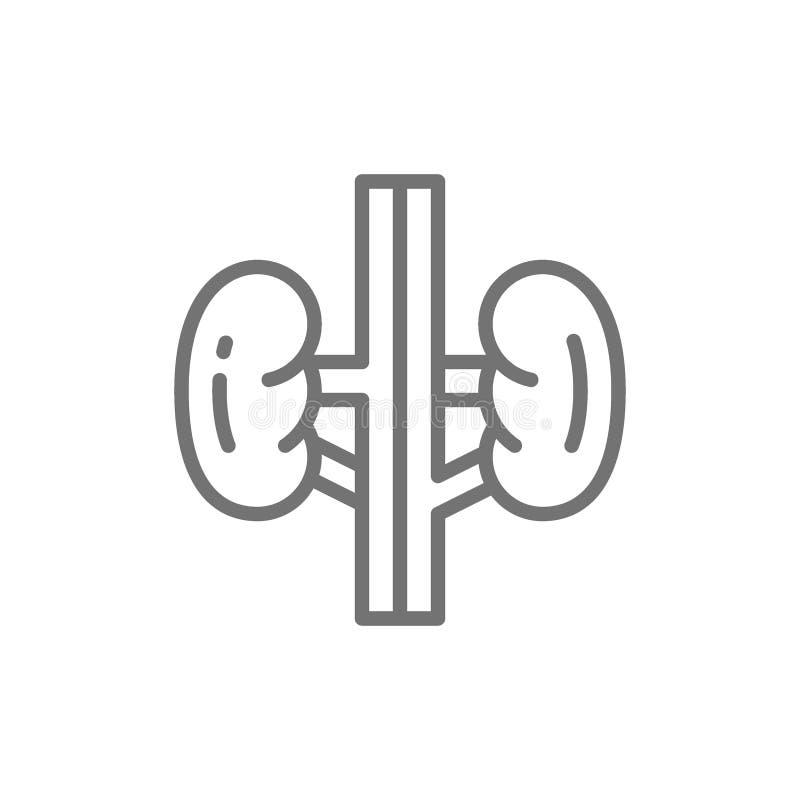 Reni, germogli, organo umano, linea icona di urologia royalty illustrazione gratis