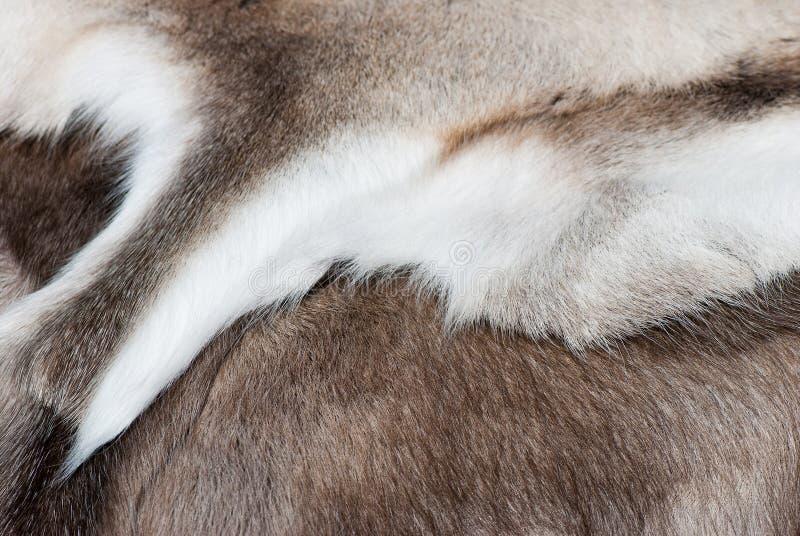 Reniferowa skóra. zdjęcia royalty free