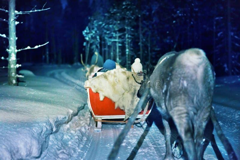 Renna della gente che sledding al safari di notte in Lapponia Finlandia immagine stock