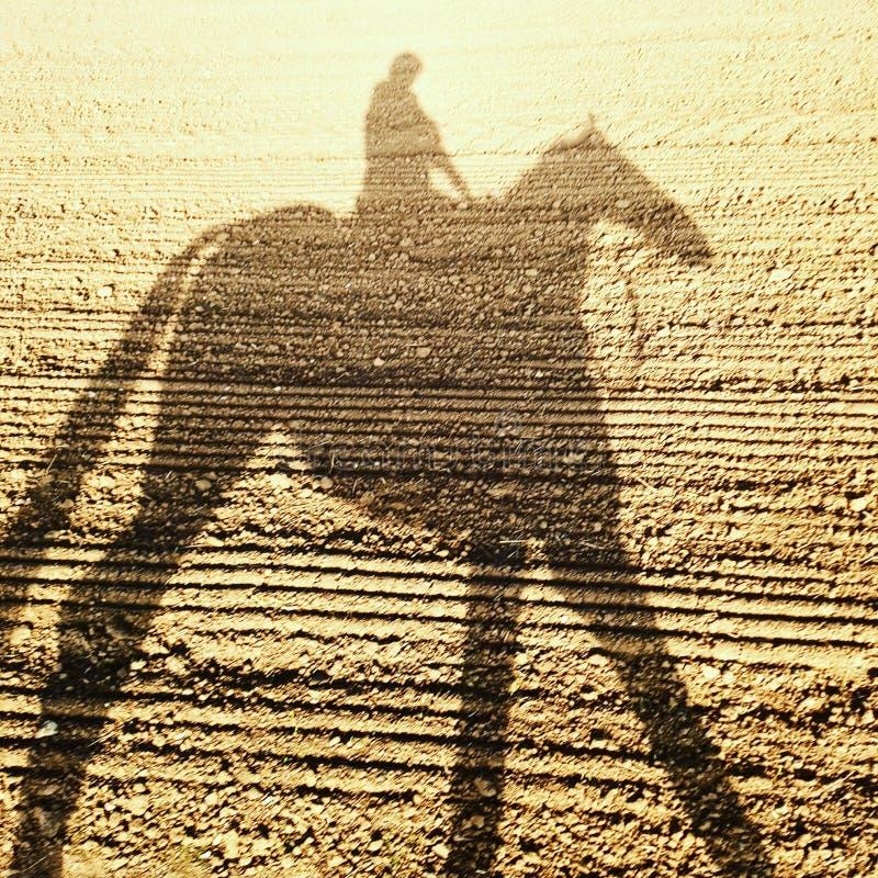 Rennpferd- u. Jockeyschatten lizenzfreies stockfoto