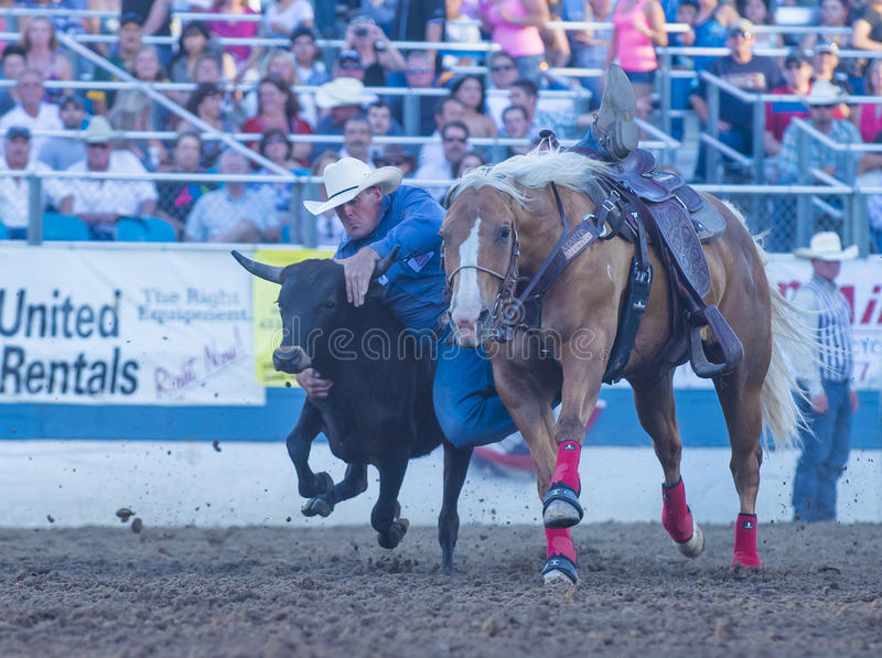 Download Reno Rodeo editorial photography. Image of riding, county - 33760542