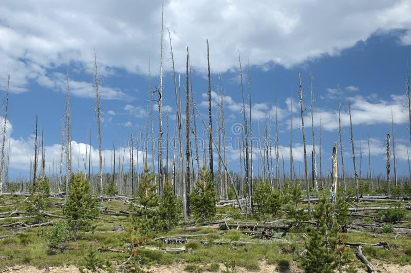 Renovação da floresta foto de stock