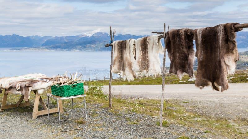Renpäls och horn på kronhjort på en souvenir shoppar i Lapland royaltyfri fotografi