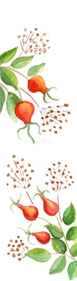 Repère d'aquarelle avec le cynorrhodon et les graines illustration stock